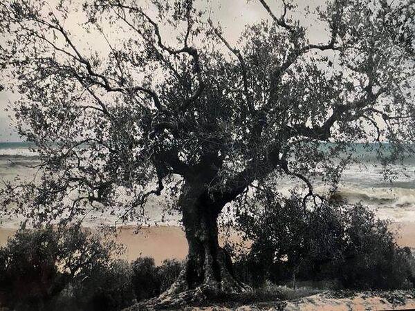 Cover image for L'éternité, un arbre