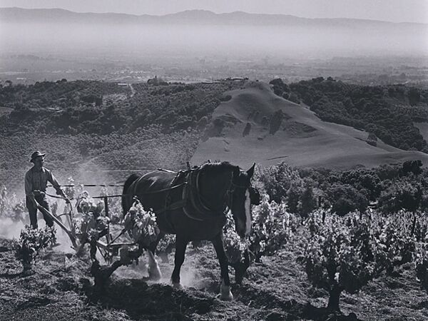 Cover image for Wine Country