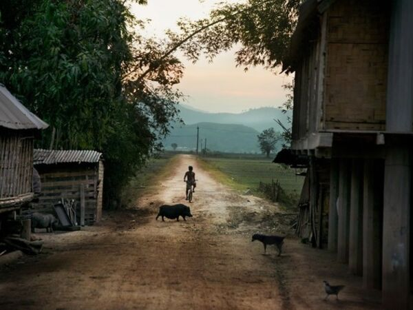 Cover image for Steve McCurry: Recent Acquisitions