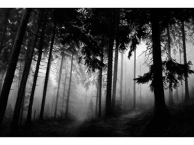Forests by Robert Longo