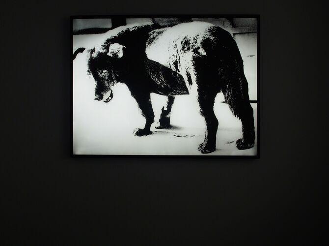 Stray Dog by Daido Moriyama