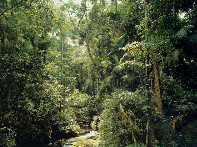 New Pictures from Paradise by Thomas Struth