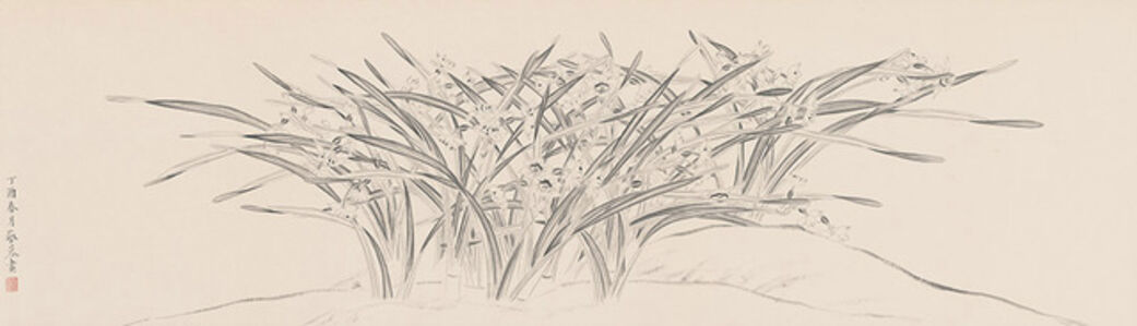 Daffodils  水仙