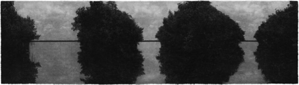 Everglades 02