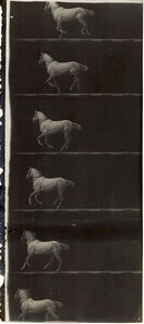 Print of Partial Film Strip of a White Horse in Six Frames