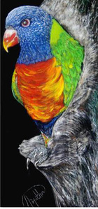 "Lorikeet (dimensions provided are framed) (unframed: 13"" x 4"")"
