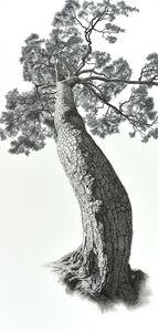 Auspicious Pine Tree 3
