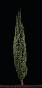 Brosh (Cypress #1)