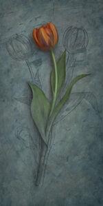 Tulip Studied