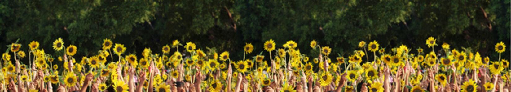 Untitled- Series Van Gogh Sunflowers