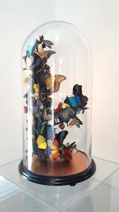 Papillon Prevails