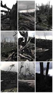 Tierra del Fuego; 360˚ Forest