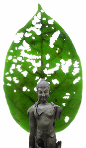 The Man,The Word,The Tree,The Lotus