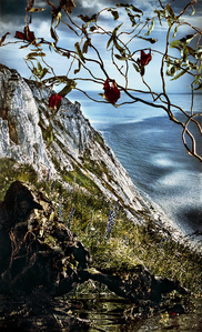 Cliff with Vines