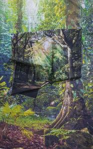 Sunrays in Rainforest