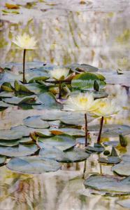73 Lotuses