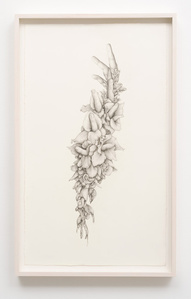 Untitled (Gladiolas)