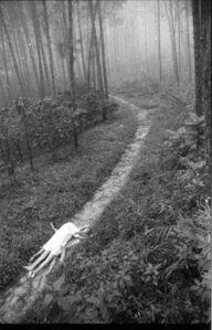 Juegos en el bosque