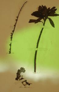 Herbier populaire III