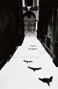 Bird's Shadow in Venice from Where Time has Stopped