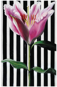 Striped Lily