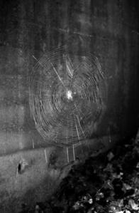 Spinnennetz No.1