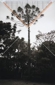 Bicho do Paraná 001