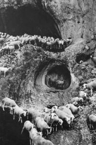 Sheep, Portugal