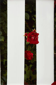 Picket Fence II
