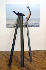 Entangled Image (Short-beaked common dolphins)