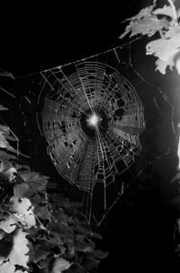 Spinnennetz No.5
