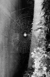 Spinnennetz No.9