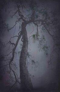 Ancient Tree No. 6