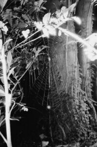 Spinnennetz No.4