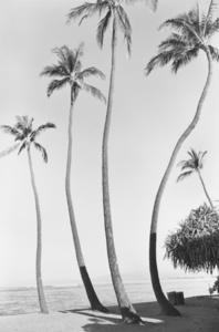 Waikiki No.1