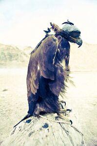 Eagle Hunter 3