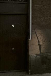 tree shadow, Madrid