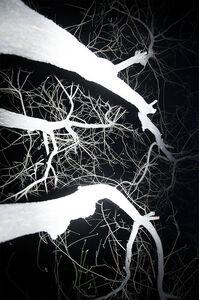 Tree(detail) No.1