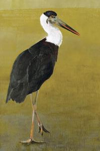 Woollynecked Stork