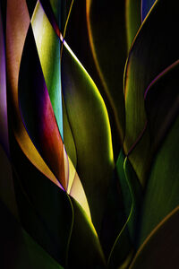 Plant Abstraction 04