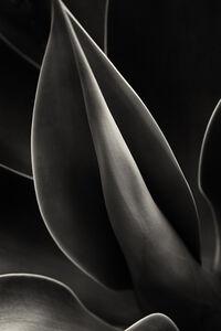 Plant Curves, Moorea
