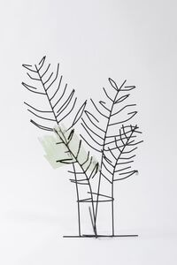 Untitled (Palm Plant)