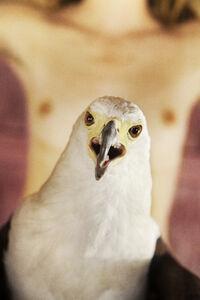 Bald Eagle (Pink)