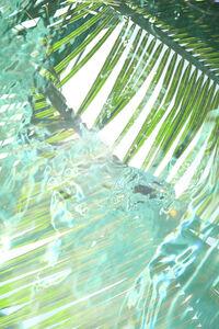 Palm Pool 2