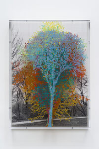 Numbers and Trees: Central Park Series III: Tree #10, Ellen T