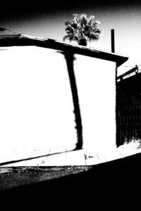 Palm & Shadow