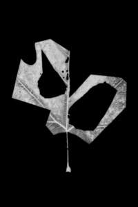 Leaf-cut 11