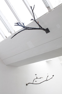 Beak Branch