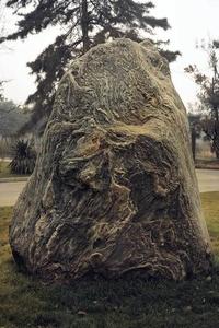 树*石头 01 Tree,rock 01