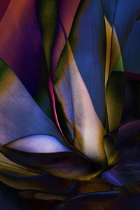 Plant Abstraction 18